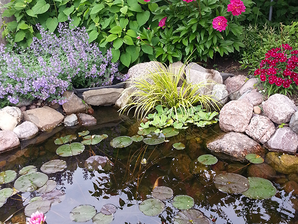 Relax in the comfort of your backyard with soothing water features, including Ponds, Waterfalls, Fountains, Streams, Reflecting Pools, and Water Gardens